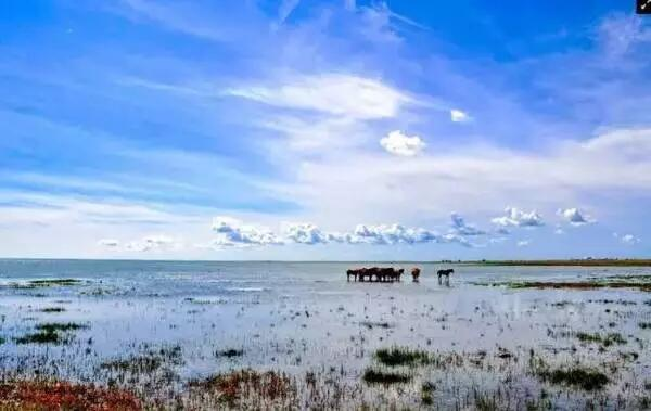 呼伦贝尔大草原湿地