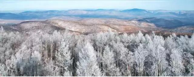 呼伦贝尔牙克石冬天的森林