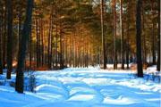 呼伦贝尔牙克石旅游之林城印象