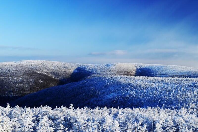 莫尔道嘎国家森林公园红豆坡