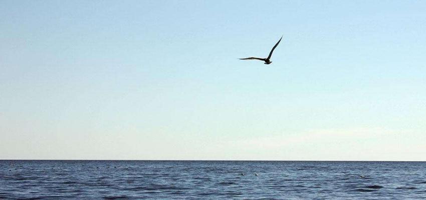 呼伦湖的原始之美