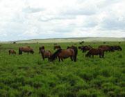 金色草原谢尔塔拉的美丽之处