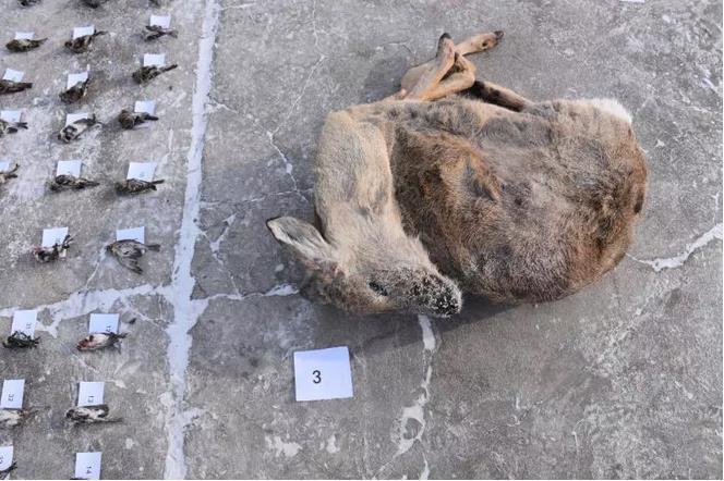 牙克石市森林公安局破获猎捕贩卖野生动物