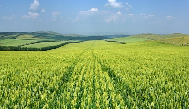 呼伦贝尔大草原五日游路线攻略