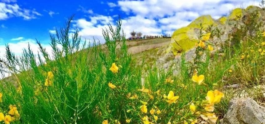 巴尔虎草原圣山在哪以及祭祀时间