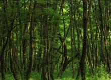 """扎兰屯市大河湾镇开展""""爱林护林、美化环境""""活动"""