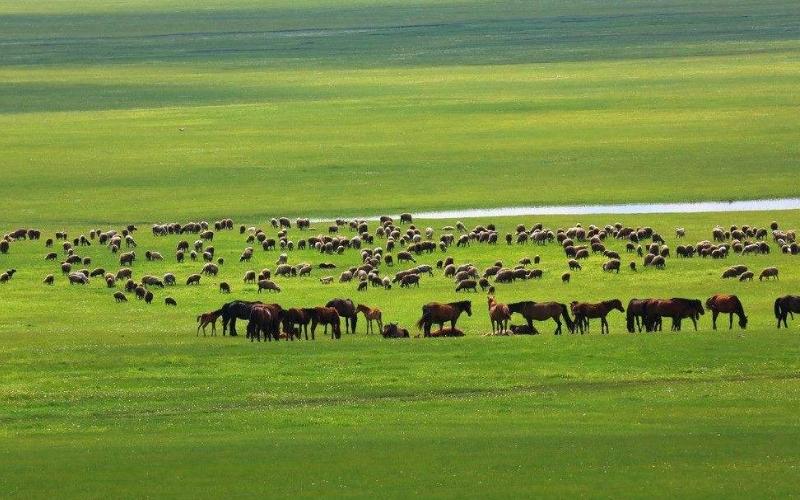 3天2晚呼伦贝尔大草原-莫日格勒河-恩和俄罗斯民族乡-满洲里三日游
