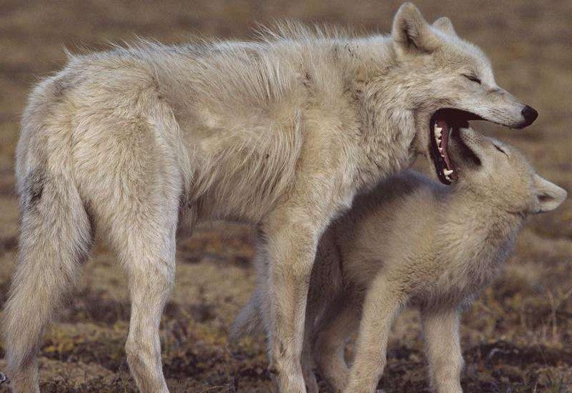 呼伦贝尔狼岛一日游