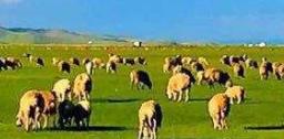 呼伦贝尔草原、满洲里、额尔古纳三日亲子游