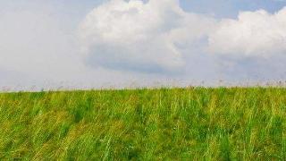 呼伦贝尔大草原、满洲里口岸、额尔古纳、恩和三日游