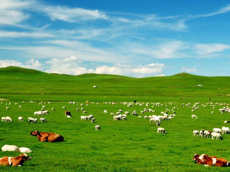 呼伦贝尔大草原、额尔古纳一日游录像
