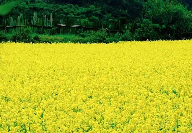 呼伦贝尔油菜花旅游节赏花路线