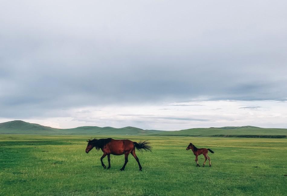 蒙古王尊享漠北草原6日游草原
