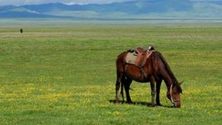 蒙古王尊享3天2晚呼伦贝尔-额尔古纳-满洲里路线