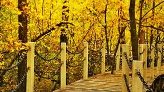 秋季呼伦贝尔根河旅游必看风景盘点