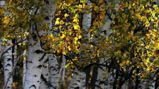 呼伦贝尔的秋天有什么