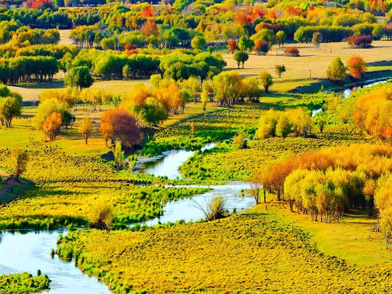 呼伦贝尔的秋季美