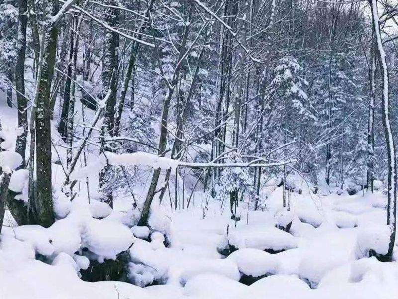 4天3晚冬季呼伦贝尔-满洲里-阿尔山旅游路线情况
