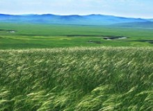 呼伦贝尔大草原四季风光无限