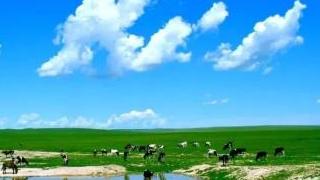 2019呼伦贝尔大草原的草现在怎么样?长出来了么?