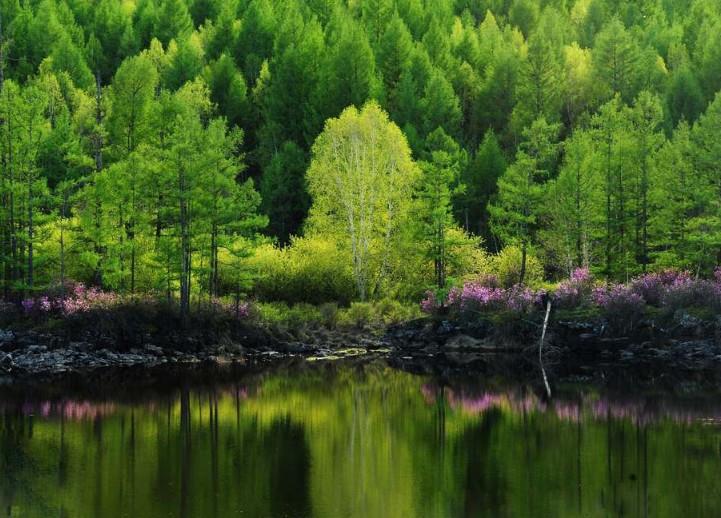 阿尔山森林公园石塘林
