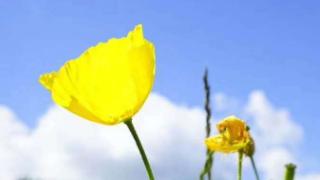 呼伦贝尔大草原旅游度假景点有哪些