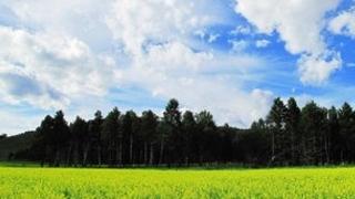 呼伦贝尔汗马国家级自然保护区有哪些景观介绍