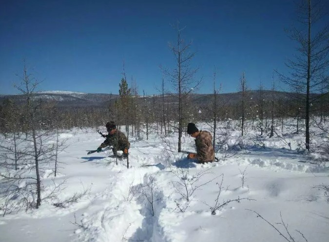 呼伦贝尔3月齐腰大雪 内蒙古大兴安岭林区18厘米大雪