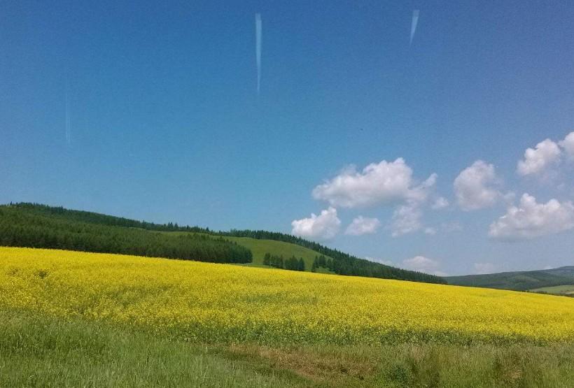 满洲里、草原、呼伦湖1日游