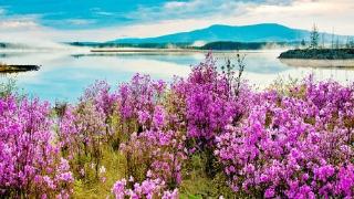 春季阿尔山踏青温泉养生两日游线路