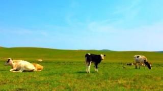 呼伦贝尔大草原五月份长草了吗