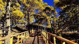 关于海拉尔国家森林公园闭园的通知