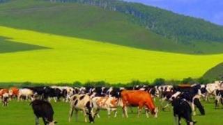 2019蒙古王穿越北线四日游线路