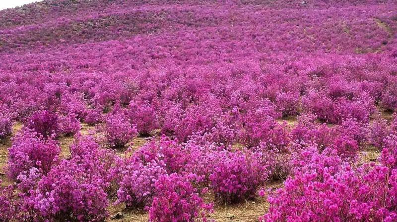 呼伦贝尔草原五月旅游线路介绍