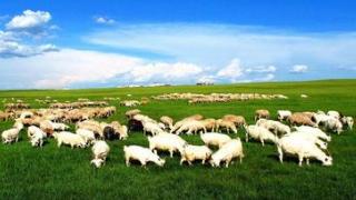 呼伦贝尔草原五月旅游线路推荐