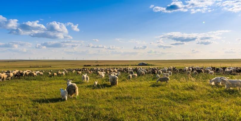 七月份呼伦贝尔草原旅游是雨季吗?天气热吗介绍?