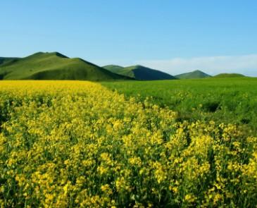蒙古王系列阿尔山一日游路线