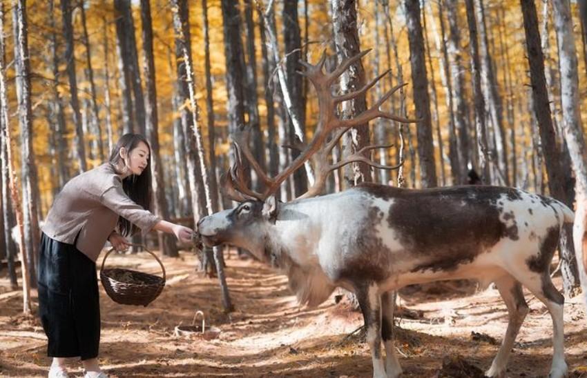 呼伦贝尔旅游敖鲁古雅使鹿部落景区
