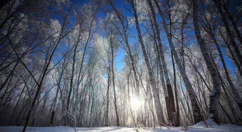 呼伦贝尔林区冬季旅游注意事项有哪些?