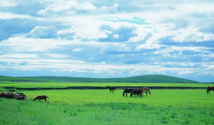 呼伦贝尔草原旅游