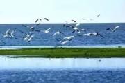 呼伦湖八景有哪些?