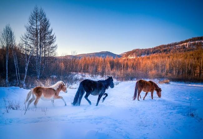 呼伦贝尔大草原冬季三日游