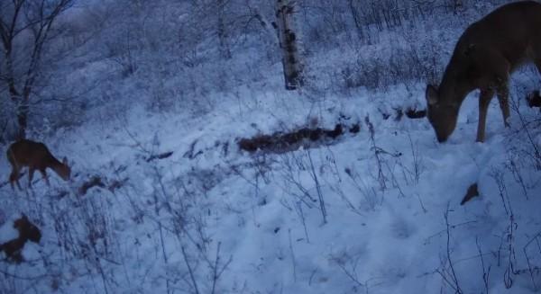 额尔古纳湿地极寒天气下的湿地动物们