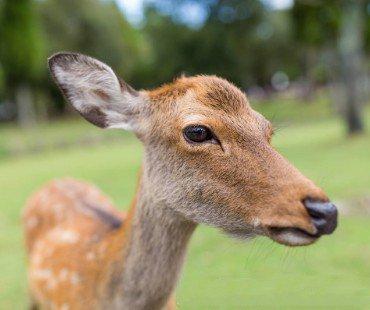 呼伦贝尔大草原上有什么动物?