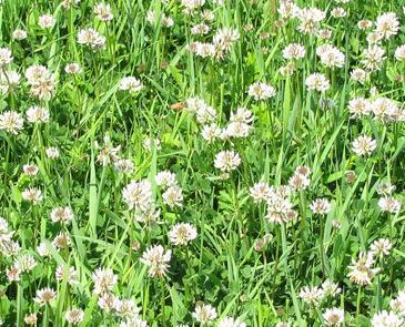 呼伦贝尔大草原上的花有哪些 什么时候适合观赏?
