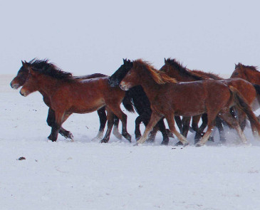 呼伦贝尔的冬季旅游持续多久 玩几天合适?