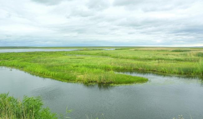 呼伦贝尔辉河湿地