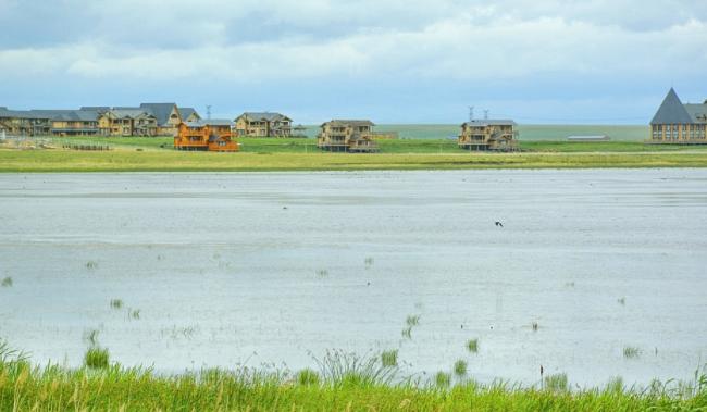 呼伦贝尔辉河湿地图片