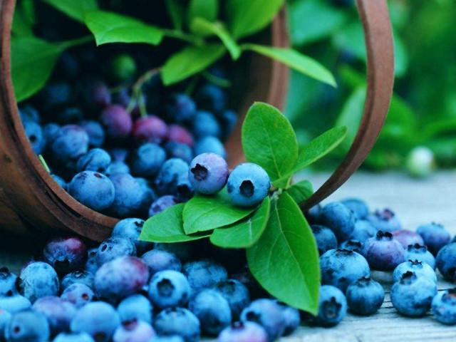 呼伦贝尔的特产野生蓝莓