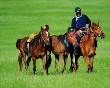 呼伦贝尔夏季旅游骑马价格 呼伦贝尔哪里骑马比较好?